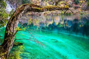 Panda Lake, Jiuzhaigou National Park, China by Feng Wei Photography