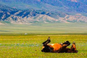 Playful Horse by Feng Wei Photography