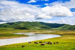 Ruoergai Grassland, Sichuan, China by Feng Wei Photography