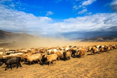 Seasonal Livestock Migration, Xinjiang China by Feng Wei Photography