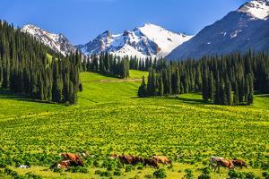 Summer Scenery on Nalati Grassland, Xinjiang China by Feng Wei Photography
