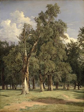 Elm Trees in Prater, 1831