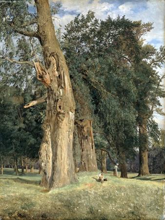 Old Elms in Prater, 1831