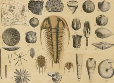 Life-Forms of the Paleozoic Epoch