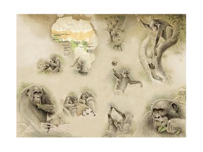 Paintings of Chimpanzees with Map of Africa by Fernando G. Baptista
