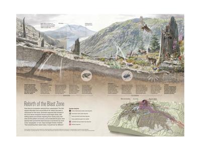 Renewal of Ecosystem in Mount Saint Helens Blast Zone by Fernando G. Baptista