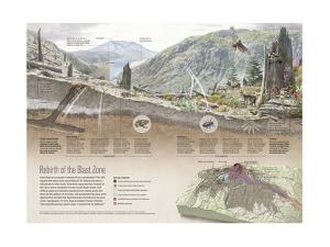 Renewal of Ecosystem in Mount Saint Helens Blast Zone by Fernando G. Baptista