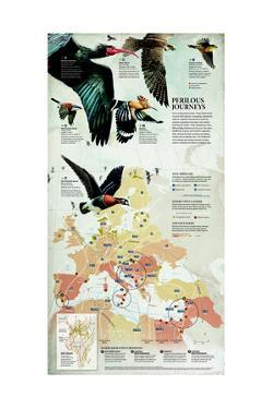 Songbirds, Waterbirds and Raptors Migrate over Eurasia by Fernando G. Baptista