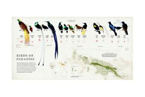 The 39 Species of Birds of Paradise and their Range in New Guinea by Fernando G. Baptista