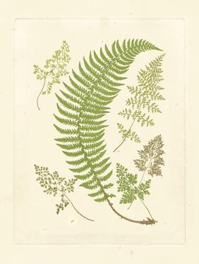 Ferns with Platemark IV