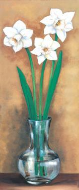 Narcissus I by Ferrer