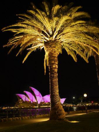 https://imgc.allpostersimages.com/img/posters/festival-of-light-sydney-opera-house-and-palm-tree-sydney-new-south-wales-australia-pacific_u-L-P91N9B0.jpg?p=0