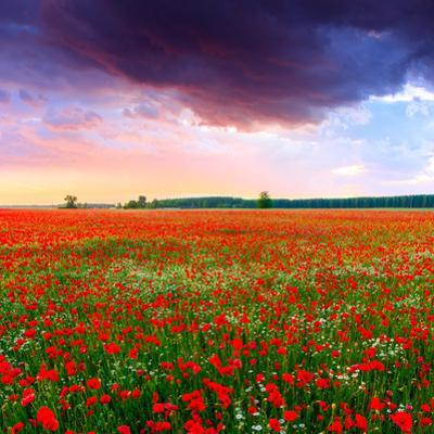 Poppies Field at Sunset in Summer in Hungary by Fesus Robert