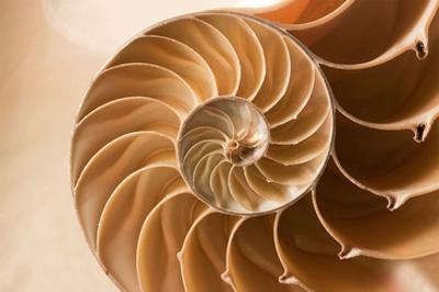 Fibonacci Pattern in a Shell