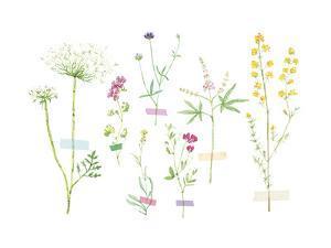 Field Flower Composite