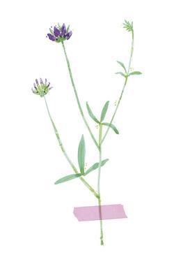 Field Flower VII