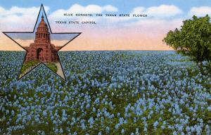 Field of Blue Bonnets, Texas State Flower