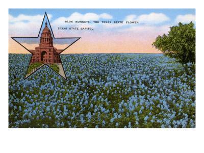 https://imgc.allpostersimages.com/img/posters/field-of-blue-bonnets-texas-state-flower_u-L-PDZQ710.jpg?p=0