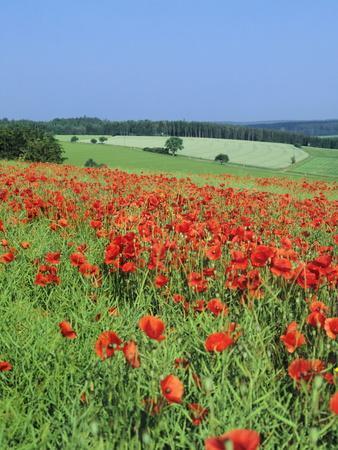 https://imgc.allpostersimages.com/img/posters/field-of-poppies-neresheim-swabian-alb-baden-wurttemberg-germany-europe_u-L-PQ8USR0.jpg?p=0