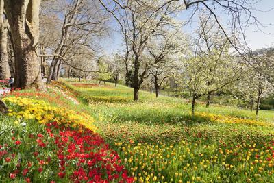 https://imgc.allpostersimages.com/img/posters/field-of-tulips-mainau-island-in-spring-lake-constance-baden-wurttemberg-germany-europe_u-L-PWFMQI0.jpg?p=0