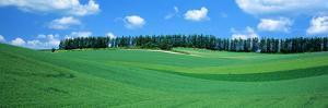 Fields Hokkaido Japan
