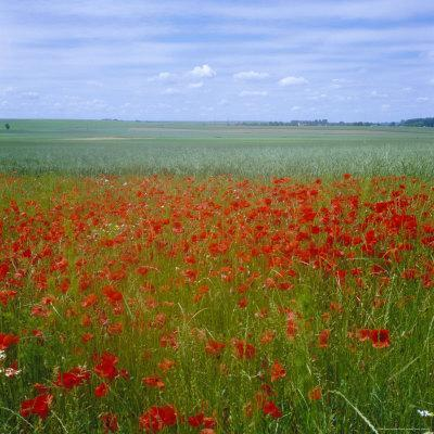 https://imgc.allpostersimages.com/img/posters/fields-of-poppies-valley-of-the-somme-nord-picardy-somme-france_u-L-P2QPLH0.jpg?artPerspective=n