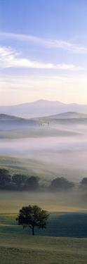 Fields Tuscany Italy