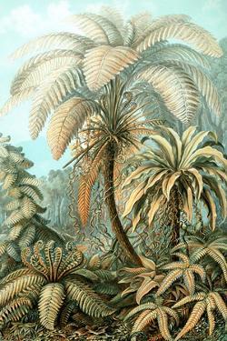 Filicinae Nature by Ernst Haeckel