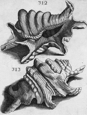 The First Book of Any Size Restricted to Molluscs; Ricreatione Dell'Occhio E Della Mente Nell'… by Filippo Buonanni