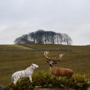 Toy Tiger and Stag /Deer on an outside Wall by Fiona Crawford Watson