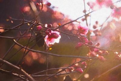 https://imgc.allpostersimages.com/img/posters/first-light-of-spring-2018_u-L-Q1GTX7D0.jpg?artPerspective=n