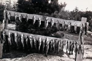 Fish Nailed on Boards
