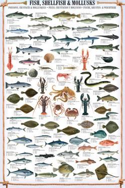 Fish Shellfish and Mollusk