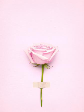 Creative Valentines Day Still Life Concept, Pink Rose in Greeting Card on Pink Paper