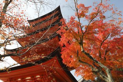 https://imgc.allpostersimages.com/img/posters/five-storey-pagoda-gojunoto-in-autumn-miyajima-island-western-honshu-japan_u-L-PWFKHR0.jpg?p=0