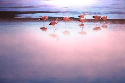 https://imgc.allpostersimages.com/img/posters/flamingo_u-L-Q130DWA0.jpg?p=0