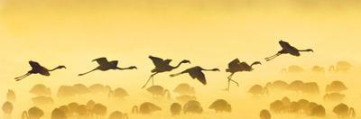 Flamingos Landing, Kenya