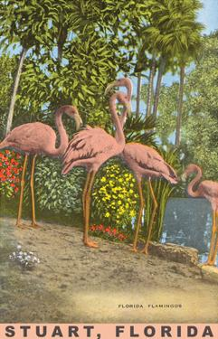 Flamingos, Stuart, Florida