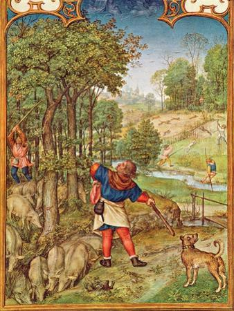 Fol.11V the Month of November: Harvesting Acorns for the Pigs and Hunting