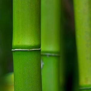 Bamboo III by Fline