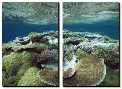 Great Barrier Reef Near Port Douglas, Queensland, Australia