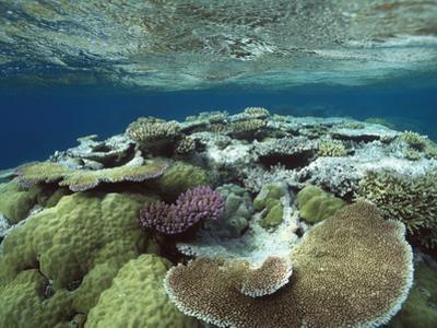 Great Barrier Reef Near Port Douglas, Queensland, Australia by Flip Nicklin/Minden Pictures