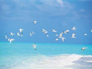 Flock of Birds Migrating Over Seascape