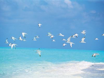 https://imgc.allpostersimages.com/img/posters/flock-of-birds-migrating-over-seascape_u-L-PXU8GS0.jpg?p=0