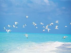 Flock of Birds Migrating Over Seascape