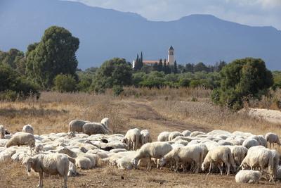 https://imgc.allpostersimages.com/img/posters/flock-of-sheep-near-pula-cagliari-province-sardinia-italy-mediterranean-europe_u-L-PQ8RFB0.jpg?p=0
