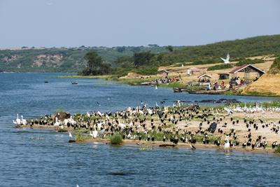 https://imgc.allpostersimages.com/img/posters/flocks-of-birds-on-the-kazinga-channel-in-queen-elizabeth-national-park_u-L-PQ8NXN0.jpg?p=0