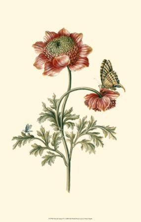 Flora and Fauna IV