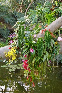 Floral Display at the Kew Orchid Festival, Kew Gardens, London