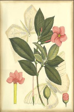 Floral Fantasia II
